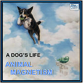 A Dog's Life by Animal Magnetism