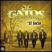 El Socio by Los Gatos De Sinaloa