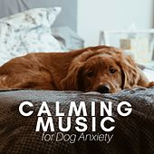 Calming Music for Dog Anxiety - Academy to Relax Pet Songs by Various Artists