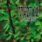 Def by The Venus In Furs