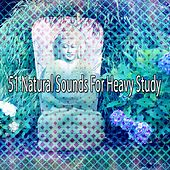 51 Natural Sounds For Heavy Study by Classical Study Music (1)