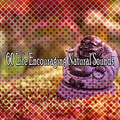 60 Life Encouraging Natural Sounds von Entspannungsmusik