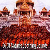 66 Of Natures Soothing Sounds de Nature Sounds Artists