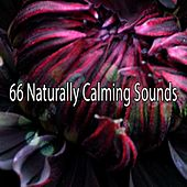66 Naturally Calming Sounds de White Noise Babies