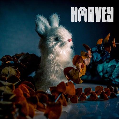 Animals by Harvey