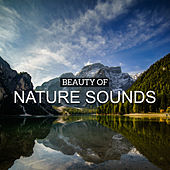 Beauty of Nature Sounds by Nature Sounds (1)