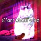 60 Sound Collection For Rest de Ocean Sounds Collection (1)