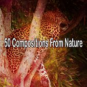 50 Compositions From Nature by Bedtime Baby