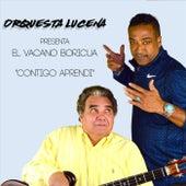 Contigo Aprendi (feat. El Vacano Boricua) by Orquesta Lucena