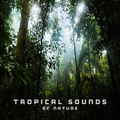 Tropical Sounds of Nature by Echoes of Nature