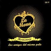 Homenaje (Los Amigos del Mismo Palo) by Carlitos