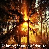16 Natural White Noise and Rain Sounds (Loopable) by Zen Music Garden