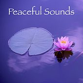 17 Natural Meditation and Spa Rain Sounds by S.P.A