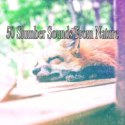 50 Slumber Sounds From Nature by Ocean Sounds Collection (1)