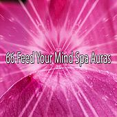 66 Feed Your Mind Spa Auras von Best Relaxing SPA Music