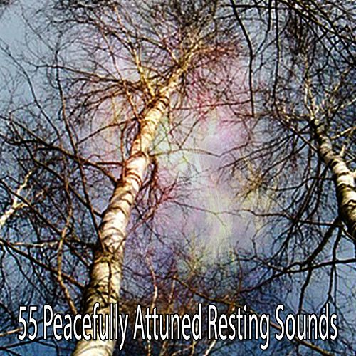 55 Peacefully Attuned Resting Sounds de The Rest