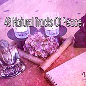 48 Natural Tracks Of Peace by Zen Meditation and Natural White Noise and New Age Deep Massage