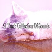 51 Track Colllection Of Sounds by Ocean Sounds Collection (1)