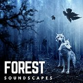 Forest by Various Artists