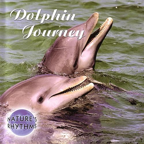 Dolphin Journey by Nature's Rhythms