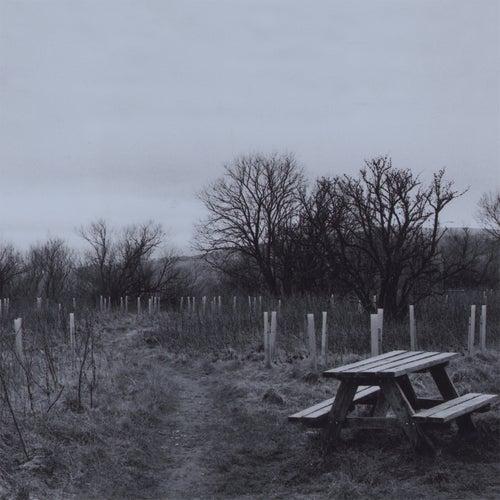 Sadboy (Edit) by Wolf Alice
