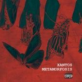 Metamorfosis de Xantos