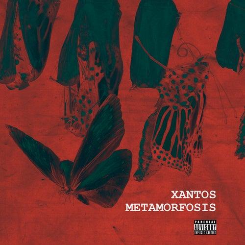 Metamorfosis by Xantos