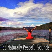53 Naturally Peaceful Sounds de Nature Sounds Artists