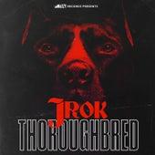Thoroughbred von J-Rok