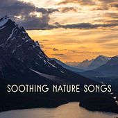 Soothing Nature Songs by Nature Sound Series