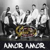 Amor Amor by Gatos Locos