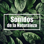 Sonidos de la Naturaleza von Soothing Sounds