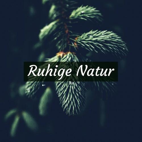 Ruhige Natur - Die Beste Entspannungsmusik der Natur by Entspannungsmusik Akademie