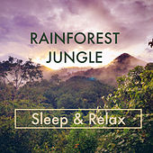 Rainforest Jungle Sounds - Sleep & Relax by Various Artists