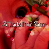 56 Tracks From Nature by Ocean Sounds Collection (1)