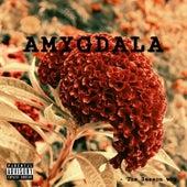 Amygdala by Domani