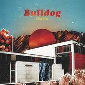 Bulldog by Soleima