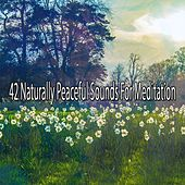42 Naturally Peaceful Sounds For Meditation de Nature Sounds Artists