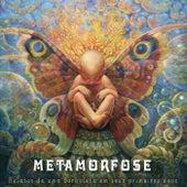Relatos de uma Borboleta em Seus Primeiros Voos von Metamorfose