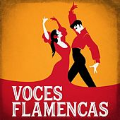Voces Flamencas by Various Artists