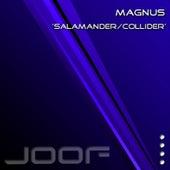 Salamander by Magnus