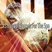 43 Tranquil Sounds For The Spa de Best Relaxing SPA Music