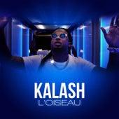 L'oiseau by Kalash