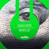 What's Up (Disscut Remix) by Adam Hofer