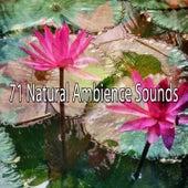 71 Natural Ambience Sounds de Meditación Música Ambiente