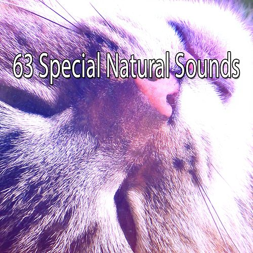 63 Special Natural Sounds by Lullaby Land
