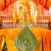 Natural Wild Life de Meditación Música Ambiente