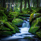 Mountain Creeks & Streams by Aural Escapes