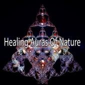 Healing Auras Of Nature de Meditación Música Ambiente