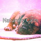 Naturally Calm by Lullaby Land